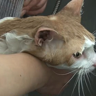Мужчина два года кормил застрявшую в стене торгового центра кошку