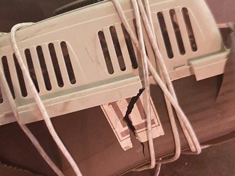 Коты на рейсе Аэрофлота умерли «из-за ветра»