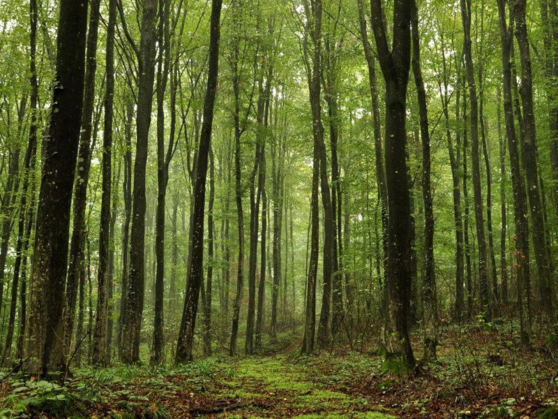 Если не остановить вырубку лесов, человечество вымрет?