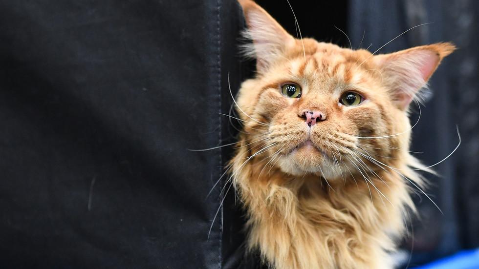 Домашние животные за долги? Российские депутаты проголосуют за запрет судебным приставам задерживать домашних животных