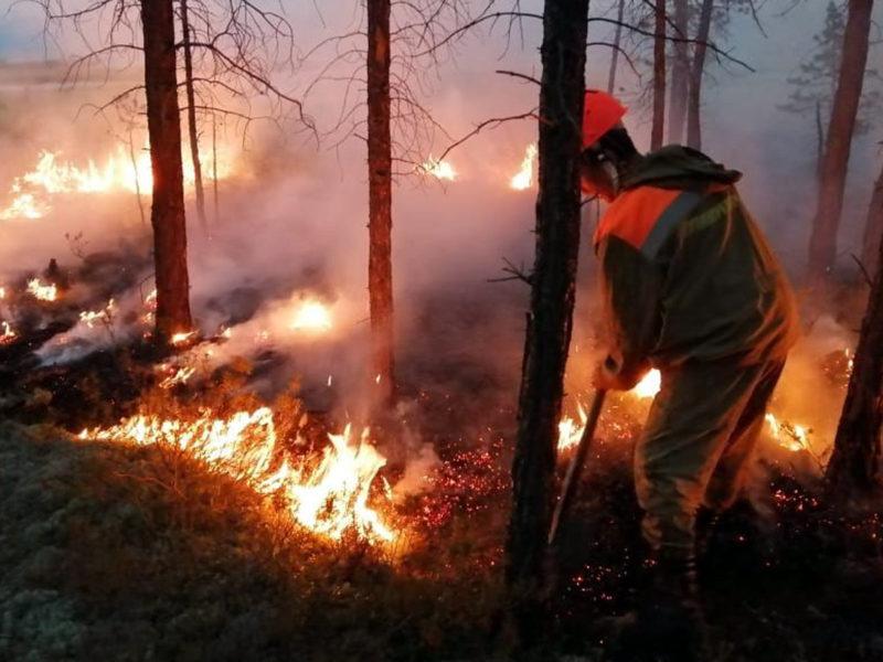Минприроды запустило онлайн-карту борьбы с лесными пожарами