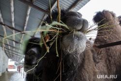 Вирусолог назвал самых опасных животных. Они грозят новыми пандемиями коронавируса