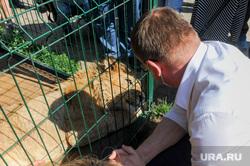 Челябинский губернатор отправит в Танзанию льва