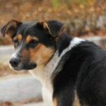 Губернатор Севастополя поручил проверить жалобу зоозащитников на«концлагерь длясобак»