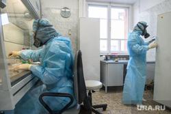 В Центре Гамалеи сказали, насколько опасен британский коронавирус