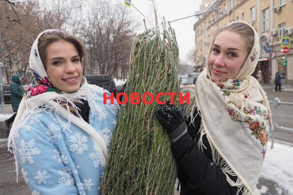 Жителям Подмосковья рассказали, какправильно перевозить елку втранспорте