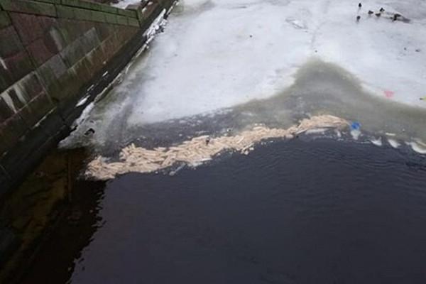 Сотни батонов хлеба выбросили вреку вСанкт-Петербурге
