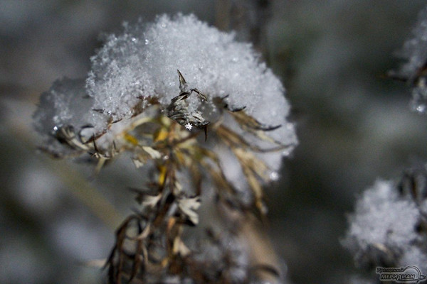 Аномально тёплая погода придёт вСвердловскую область