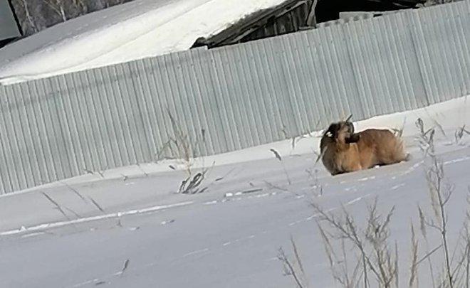 ВВасильево неизвестный выстрелил всобаку изарбалета— животное несколько дней ходит сострелой втеле