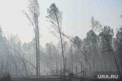 Синоптики предупредили об угрозе крупных пожаров в ХМАО