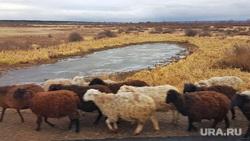 В курганском селе нашли десятки трупов животных
