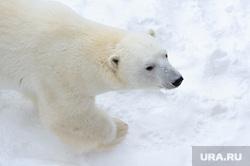 МИД объяснил, зачем РФ восстанавливает военные объекты в Арктике