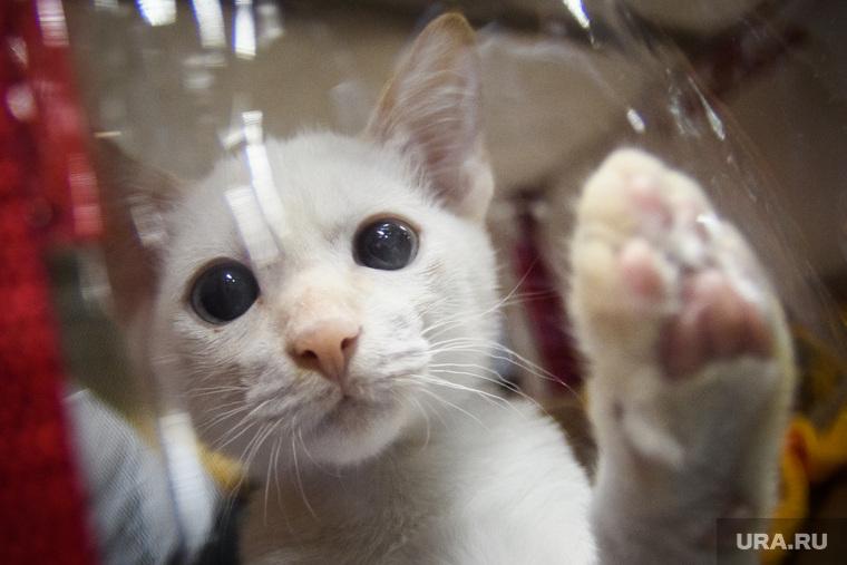 Злобные твиты про звезд иновый сериал про котиков