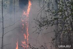 В Челябинской области эвакуируют детские лагеря из-за пожара