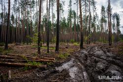 Свердловский курьер задушил коллегу в лесу, когда искал наркотики