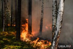 Лесной пожар близ Екатеринбурга приближается к ЕКАД