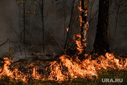 На Урале продолжают действовать более десяти лесных пожаров