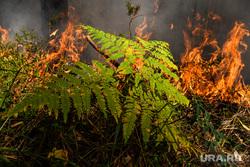 Вильфанд заявил, что торфяники в Екатеринбурге будут долго гореть